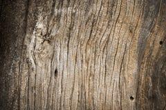 Drewniana tekstura stary wysuszony drzewo Zdjęcie Royalty Free