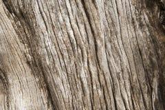 Drewniana tekstura stary wysuszony drzewo Obraz Stock