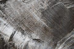 Drewniana tekstura stary wysuszony drzewo Fotografia Stock