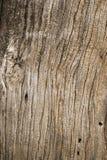 Drewniana tekstura stary wysuszony drzewo Fotografia Royalty Free