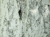 Drewniana tekstura z białą farbą Fotografia Royalty Free
