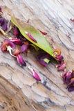 Drewniana tekstura z kwiatów płatkami Zdjęcie Royalty Free
