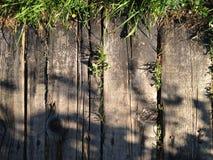Drewniana tekstura z trawą Obraz Stock