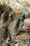 Drewniana tekstura z vegetal włóknem na bagażniku palma Zdjęcia Stock