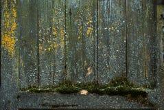 Drewniana tekstura z wietrzejącym spojrzeniem, Fotografia Royalty Free