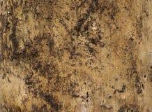 Drewniana tekstura zmroku wysuszony drzewo Zdjęcie Stock