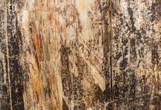 Drewniana tekstura zmroku wysuszony drzewo Fotografia Stock