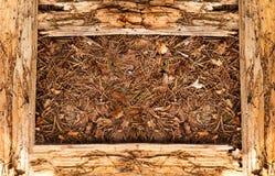 Drewniana tekstury rama Zdjęcia Stock