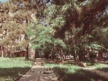 Drewniane ławki i okwitnięć drzewa w miasto parku blisko bilding Wiosna w mieście fotografia stock