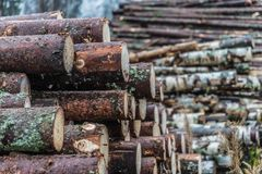 Drewniane bele brogować w stosie Fotografia Stock