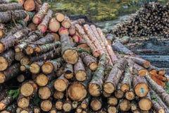 Drewniane bele brogować w stosie Obraz Stock