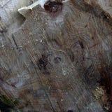Drewniane bele izoluj? tekstury t?o, drewniane deski obraz royalty free
