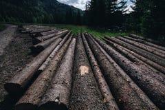 Drewniane bele umieszczać na ziemi obraz royalty free