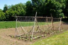 Drewniane budowy na organicznie gospodarstwie rolnym zdjęcie royalty free