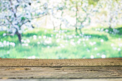 Drewniane deski na wiosny tle Fotografia Royalty Free
