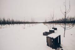 Drewniane klatki piersiowe w sadzie w zimy scenerii obraz royalty free