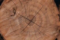 Drewniane naturalne cięcie bele zdjęcie royalty free