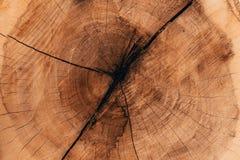 Drewniane naturalne cięcie bele obraz royalty free