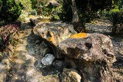 Drewniane skamieliny na centrum park lub ogród w Bogor Indonesia zostać skałą lub drylują - fotografię zdjęcie royalty free