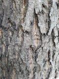 drewniane tekstury Obrazy Stock