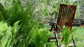 Drewnianego krzesła owocowy drzewo zbiory wideo