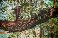 Drewnianego mężczyzna Tnący drzewo, kotlecika kotlecika szalunek zdjęcia royalty free