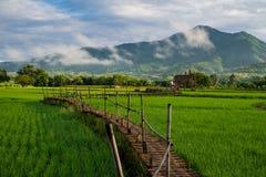 Drewnianego mosta i ryż pole w Tajlandia Zdjęcie Royalty Free