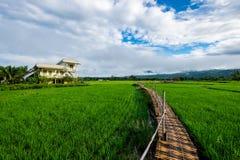 Drewnianego mosta i ryż pole w Tajlandia Zdjęcie Stock