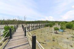 Drewnianego mosta prowadzenie namorzynowy las fotografia royalty free
