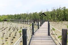 Drewnianego mosta prowadzenie namorzynowy las fotografia stock