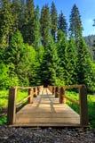 Drewnianego mosta rozciąganie w lasu vertical Zdjęcie Royalty Free