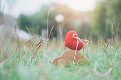 Drewnianego samochód zabawki przewożenia czerwony serce na wierzchołku Zdjęcie Stock