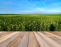 Drewnianej deski pusty stół przed canola gospodarstwem rolnym Obraz Royalty Free