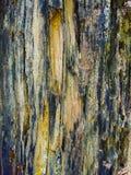 Drewnianej starej tekstury czarny i biały kolor obrazy royalty free