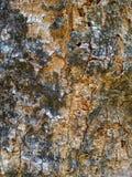 Drewnianej tekstury drzewny szczegół zdjęcia stock
