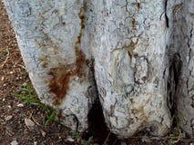 Drewnianej tekstury rżnięty drzewny bagażnik Zdjęcie Royalty Free