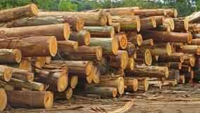 Drewniani bagażniki Zdjęcie Royalty Free