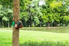 Drewniani domy dla ptaków na drzewie obraz stock