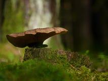 Drewniani i drzewni grzyby Zdjęcie Stock
