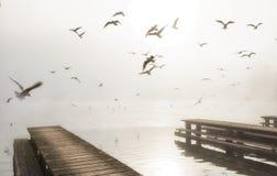 Drewniani jetty juts w Traunsee jezioro, obrazy stock