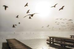 Drewniani jetty juts w Traunsee jezioro, obrazy royalty free