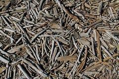 Drewniani kije na ziemi obrazy royalty free
