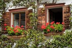 Drewniani okno z petunią i bonkrety drzewem w Hallstatt Fotografia Stock