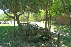 Drewniani pokładów krzesła pod drzewem zdjęcia stock