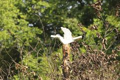 Drewniani ptasi Slawistyczni symbole Zdjęcie Royalty Free