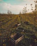 Drewniani pudełka w młodym sadzie Zdjęcia Royalty Free