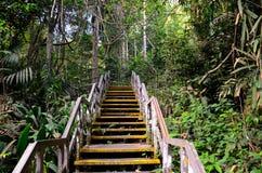 Drewniani schodów prowadzenia w las tropikalnego Fotografia Stock