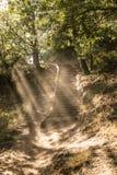 Drewniani schodki w lesie fotografia royalty free