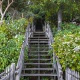 Drewniani schodki w lesie wśród luksusowego ulistnienia fotografia royalty free