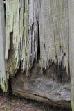 Drewniani Szczegóły Zdjęcia Royalty Free